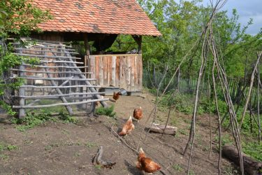 The chicken garden in 2014