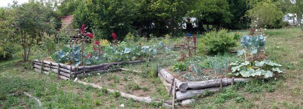 Permaculture garden: Colorful polyculture for diversity